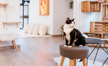 Как сделать домик для кота своими руками в домашних условиях